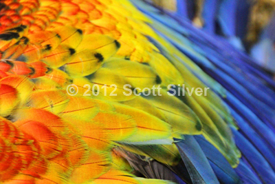 Macaw Wing